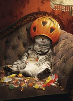 anim, funni, halloween candy, candies, fat cats