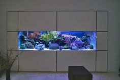 Ralf Prehn has created a reef masterpiece.  His 870 gallon display is a perfect balance of art and design, science and engineering, passion and discipline.  Ralf set out to recreate a slice of natural coral reef in Hamburg, Germany.  Six years in, the result of his dedication is nothing short of amazing.