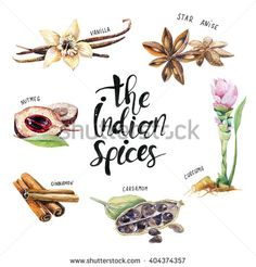 Watercolor Spices Stock Photos, Images, & Pictures | Shutterstock
