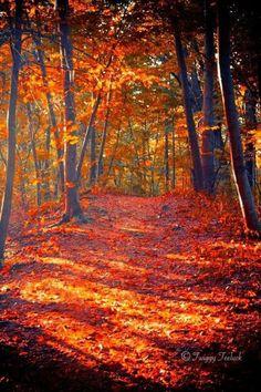 beautiful Autumn /  Crunching Along/Pinterest on We Heart It.