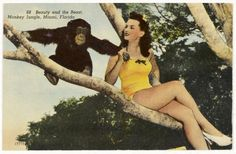 Monkey Jungle postcard, Miami, ca. 1930. (The Wolfsonian-Florida International University)