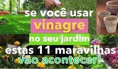 Thumb SE VOCÊ USAR VINAGRE NO SEU JARDIM, ESTAS 11 MARAVILHAS VÃO ACONTECER!