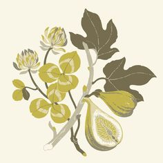 Fig & Clover by Teagan White