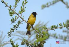 Birds Photos, Fotografia