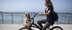 Как живется собакам в Тель-Авиве http://kleinburd.ru/news/kak-zhivetsya-sobakam-v-tel-avive/