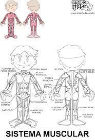 Resultado de imagen de e. infantil aparato circulatorio