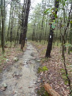 Hiking the Appalachian Trail in Pennsylvania