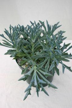 Interested In Organic Gardening? Rock Garden Plants, House Plants, Cacti Garden, Cacti And Succulents, Planting Succulents, Indoor Cactus, Cactus Cactus, Cactus Types, Mini Plantas