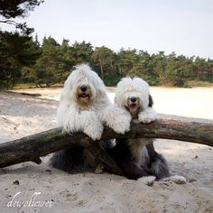 """twin sisters"" ---- [Photo by dewollewei (Cees) - June 15 2011 - Arrien, Overyssel, Netherlands]'h4d'121006"