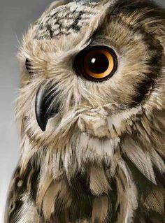 Pin by Emkay Fosnacht on Birds Owl Bird, Bird Art, Pet Birds, Owl Photos, Owl Pictures, Beautiful Owl, Animals Beautiful, Regard Animal, Animals And Pets