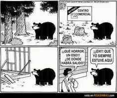 ¿De dónde ha salido este oso?