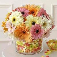Gerber Daisy and Jelly Bean centerpiece