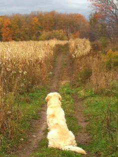 pinterest country roads | Pondering the Road Ahead: Willoughby, Fall 2011 by krista