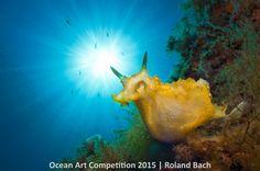 The eye-catching, spectacular winning images of marine life