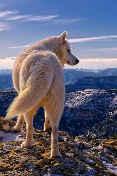Watcher on the ridge! Keen eyes can sweep the entire valley, for trouble.