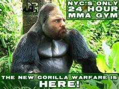 http://www.JungleGymBronx.com