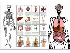 Medicine, Science, Comics, Montessori, Biology, Anatomy, Cartoons, Medical, Comic
