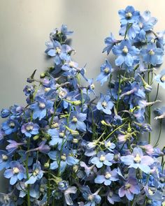 Covington, LA Florist Specializing in Flower Delivery, Wedding Flowers, Funeral & Sympathy Flowers and Flower Subscription Service. Baby Blue Aesthetic, Light Blue Aesthetic, Nature Aesthetic, Aesthetic Colors, Flower Aesthetic, Everything Is Blue, No Rain, Ravenclaw, My Flower
