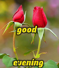Good evening S. Good Afternoon Quotes, Good Morning Roses, Good Morning Image Quotes, Good Morning Beautiful Pictures, Good Morning Images Flowers, Sweet Night, Good Night Sweet Dreams, Good Evening Love, Good Evening Greetings