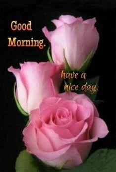 472 best Good Morning Gif photos by sonusunariya Good Morning Beautiful Flowers, Good Morning Images Flowers, Good Morning Roses, Good Morning Gif, Morning Pictures, Morning Coffee, Monday Morning Greetings, Good Morning Greeting Cards, Happy Sunday Quotes