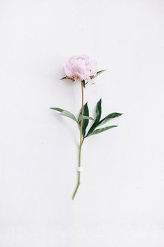 Flowers peonies wallpaper inspiration Ideas for 2019 Tumblr Wallpaper, Wallpaper Backgrounds, Iphone Wallpaper, Wallpaper Ideas, Wallpaper Art, Iphone Backgrounds, Rosa Vintage, Vintage Roses, Desenio Posters