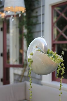 Nautilus hanging planter (Visit a Mermaid's Garden: The Backyard)