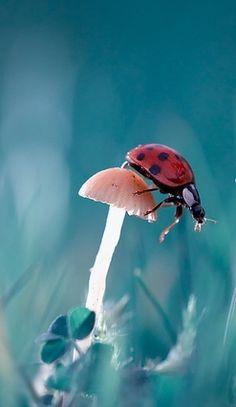 Turquoise, mushroom, ladybug