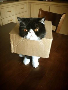 These cats were exploring and trying to have fun, and while it didn't end up that way it did give some pretty cute photos to look at. Funny Cat Fails, Funny Cats, Business Cat, Love Box, Chuck Norris, Pretty And Cute, Cute Photos, Make You Smile, That Way