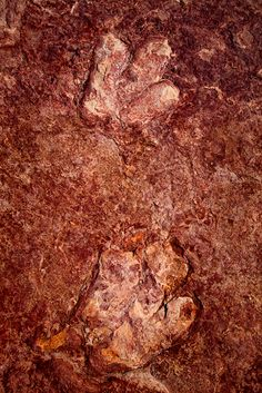 Dinosaur Tracks - Dilophosaurus - Page, Arizona