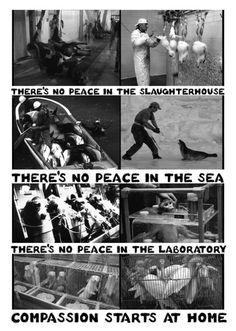 Animal Rights - No peace