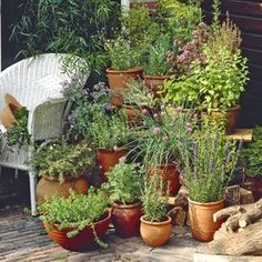 Herb Gardening For Beginners: Starting an Herb Garden