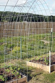 idea for green bean trellis.... I need to figure out a better trellis for next year.  Maybe something like this?