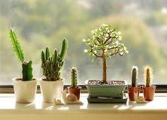 7 ideias para se inspirar na hora de decorar a casa com cactos