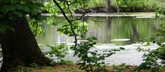 Bailey Arboretum, Lattingtown, NY