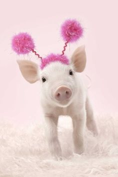 <3 .cute pig with a pink pom-pom hat...have I been drinking?! lol <3