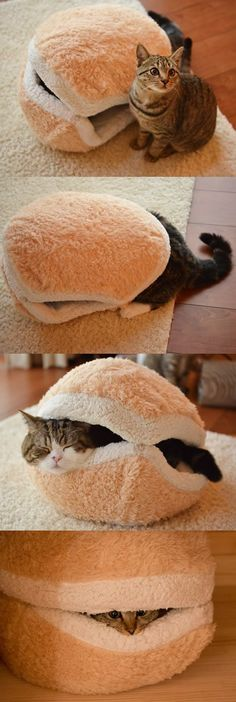 "Cat Hamburger - ""Do you want one now? Someone wipe the site off the photo, but I think it's adorable too!"""