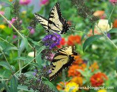 Callaway Gardens Georgia Camping ideas Pinterest Gardens