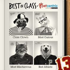 """If you think your pet is a star, submit their photo to be considered as """"Best In Class"""" on our Facebook page! Get your pictures ready and click the photo for more details."""