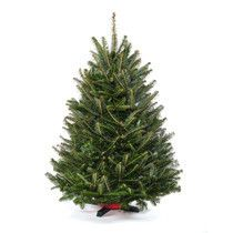 real christmas trees delivered green fir freshly cut christmas tree with stand - Best Live Christmas Trees