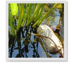 What Are The Benefits Of Using Barley Straw In My Pond?