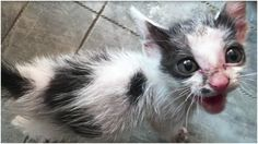 One little kitten was alone and helpless, left by the roadside to fend for herself in the dirt. And we'll never know how many people, if any, ignored her cries for food and attention. But one person couldn't just walk on by; in fact, he did everything he could to save her life.