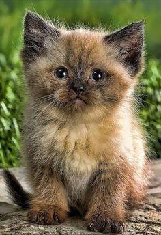 Mr Flinn - Adventure Cat - About - Google+