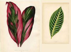 Botanicals 2 Free Prints Graphics Fairy