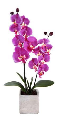 Orchidée 2 branches avec Pot effet ciment - Coloris : Rose