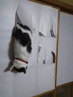 How inconsiderate - I've had to put in my own cat flap!