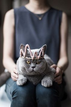 Kitty is queen