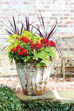 <p>Update a vintage container with bold, heat-tolerant geraniums and a backdrop of rambling green plants.</p>