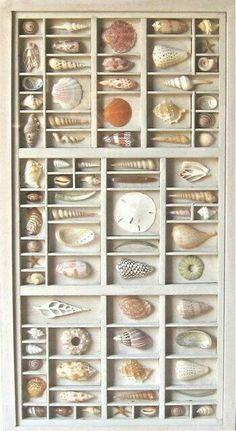 Sea shell art, cut shell collage or assemblage, within a repurposed wood letterpress type box, type tray, type case or type drawer. Seashell Display, Seashell Art, Seashell Crafts, Beach Crafts, Kids Crafts, Printers Drawer, Shell Collection, Repurposed Wood, Displaying Collections