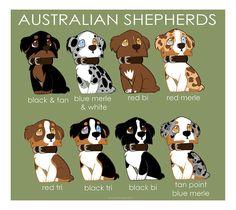 Love their colors :)  Australian Shepherd Color Patterns by briteddy.deviantart.com #AustralianShepherd
