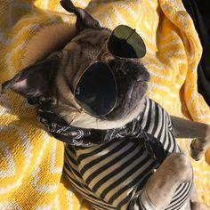 101 Best Doug The Pug Pictures - meowlogy Doug The Pug, Lollapalooza, Nashville, Pug Pictures, Black Pug, Pug Puppies, Cute Pugs, Pug Love, Animal Fashion